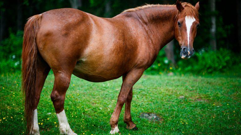 equinos-3b